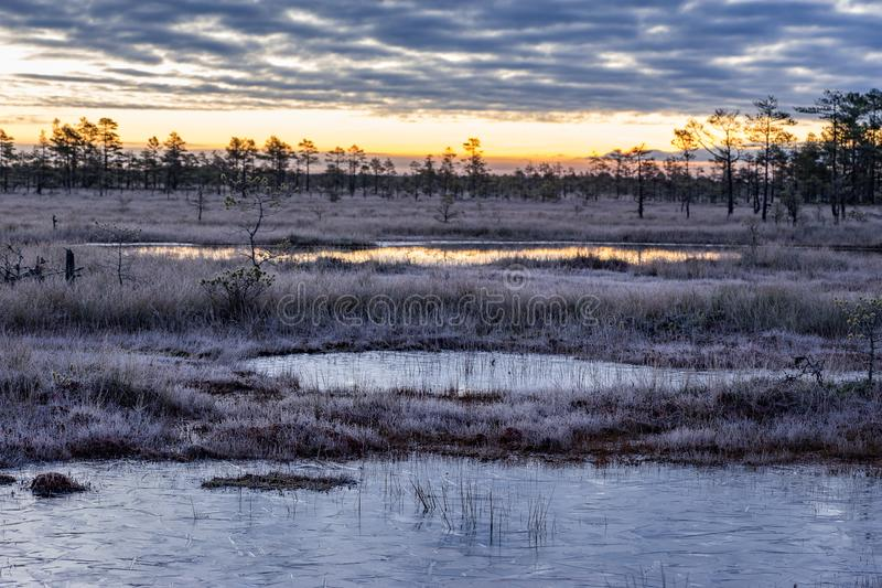 Sunrise in the bog. Icy cold marsh. Frosty ground. Swamp lake and nature. stock photo