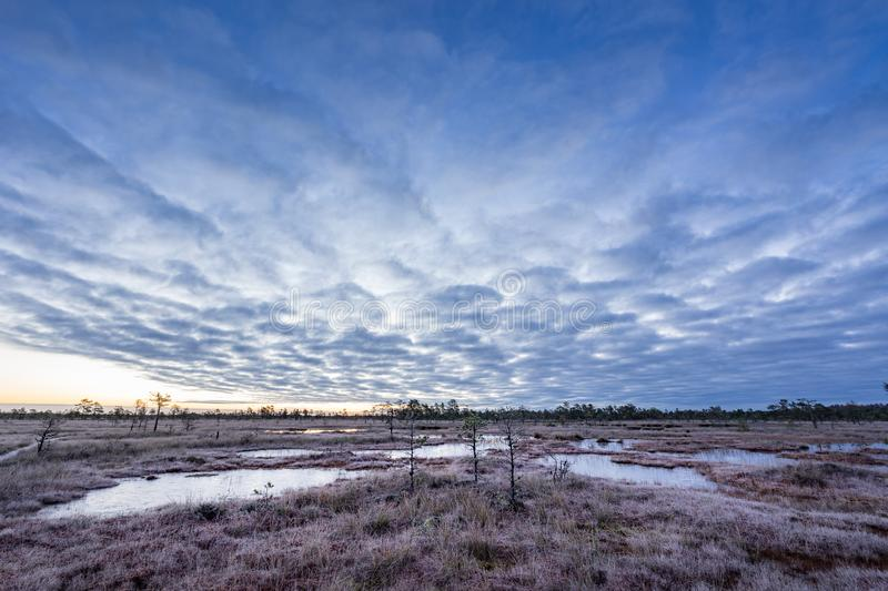 Sunrise in the bog. Icy cold marsh. Frosty ground. Swamp lake and nature. royalty free stock images