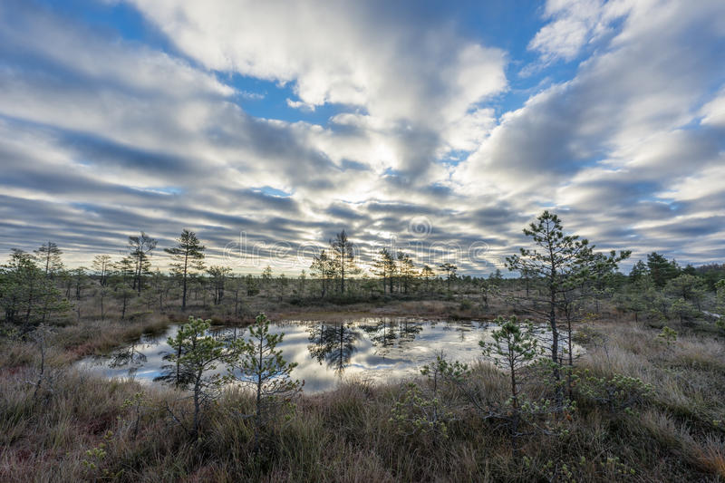 Sunrise in the bog. Icy cold marsh. Frosty ground. Swamp lake and nature. Freeze temperatures in moor. Muskeg natural environment. royalty free stock photography