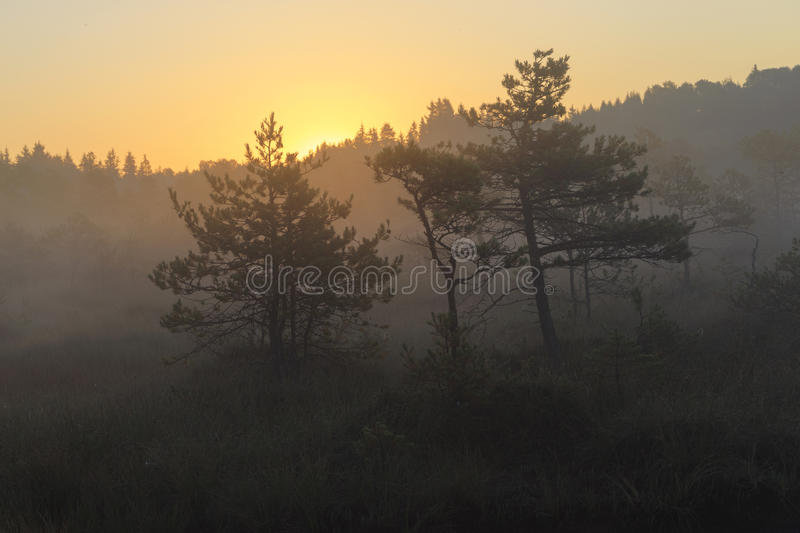 Download Sunrise in the bog, marsh stock photo. Image of dawn - 70181624