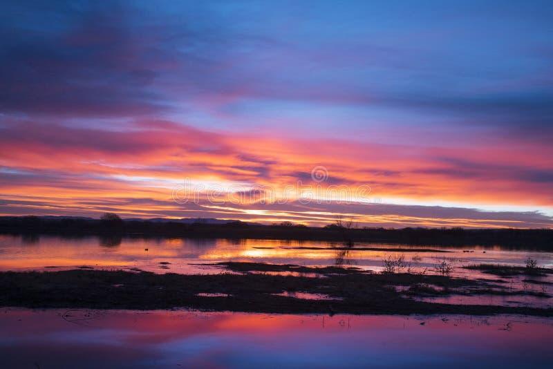 Sunrise at Bosque del Apache, New Mexico royalty free stock photo