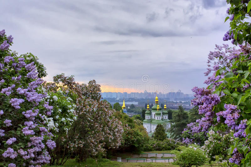 Sunrise in Botanical Garden royalty free stock images