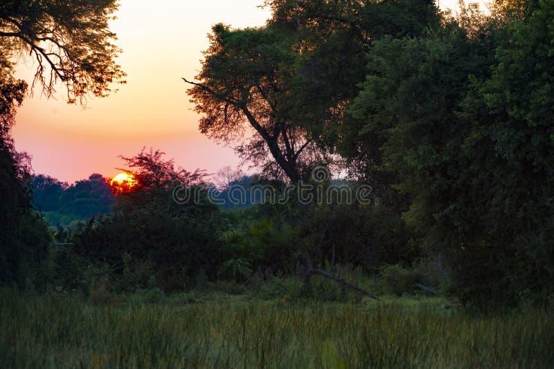 Sunrise, Botswana royalty free stock photography