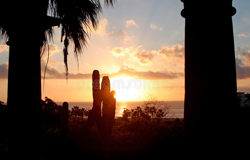 Sunrise in Cabo. A sunrise over the ocean with palm trees and cactus royalty free stock photos