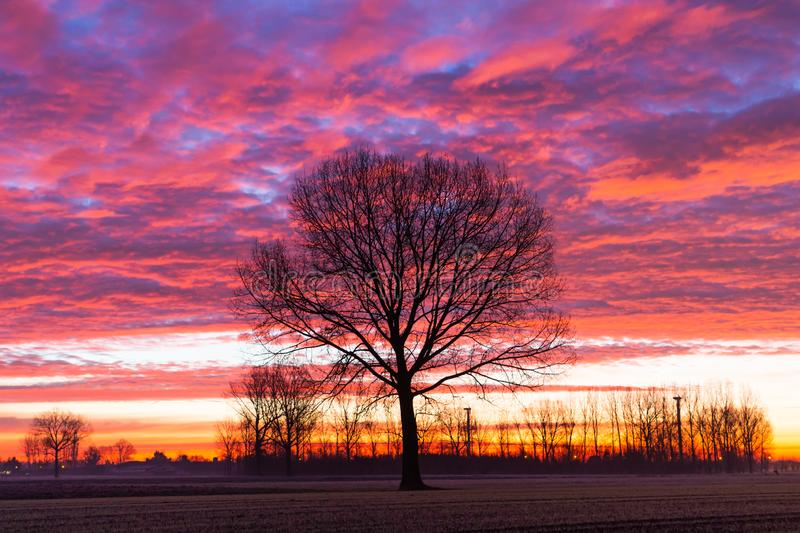 Sunrise cold winter day lonely tree stock photography