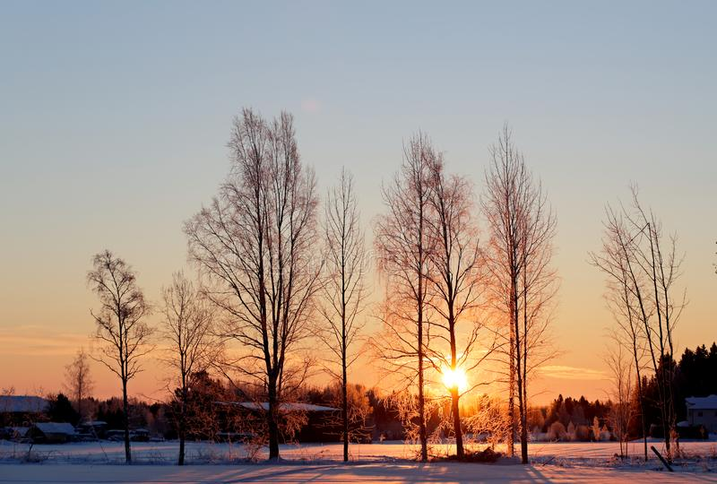 Sunrise in cold winter morning. Bare tree trunks with rising sun in very cold winter morning royalty free stock photography