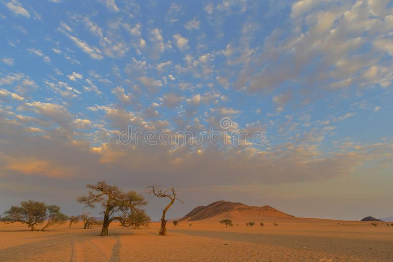 Sunrise color clouds above camel thorn trees. Namibia stock photography
