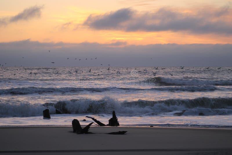 Sunrise in Corolla,North Carolina. Very clear March sunrise picture of Corolla Beach stock photo