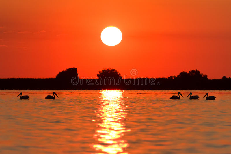 Sunrise in the Danube Delta stock image