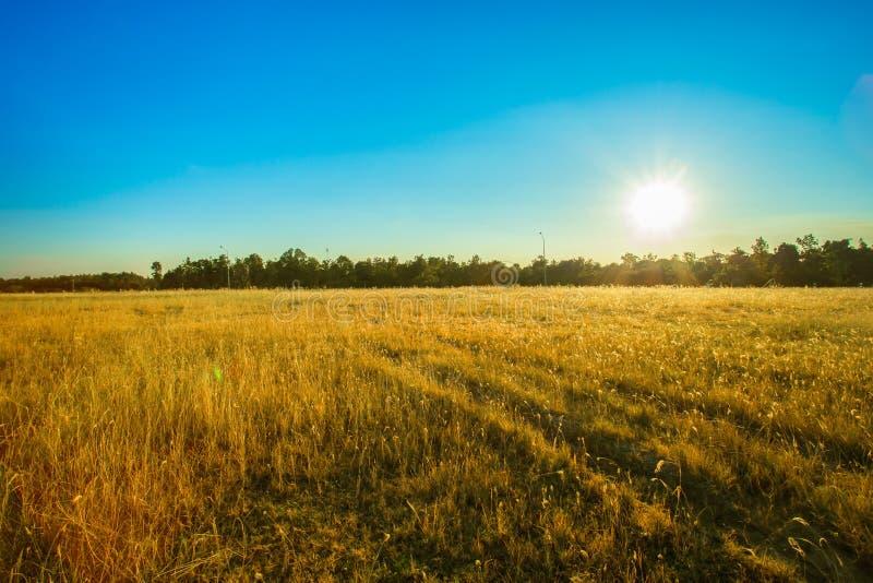 Sunrise - Dawn, Field, Sun, Farm, Sky stock photo