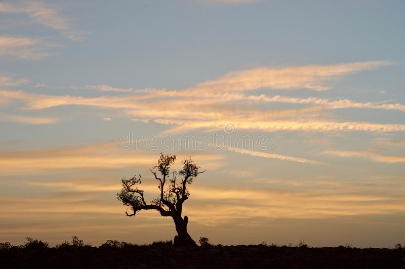 Sunrise with dead standing tree royalty free stock photography