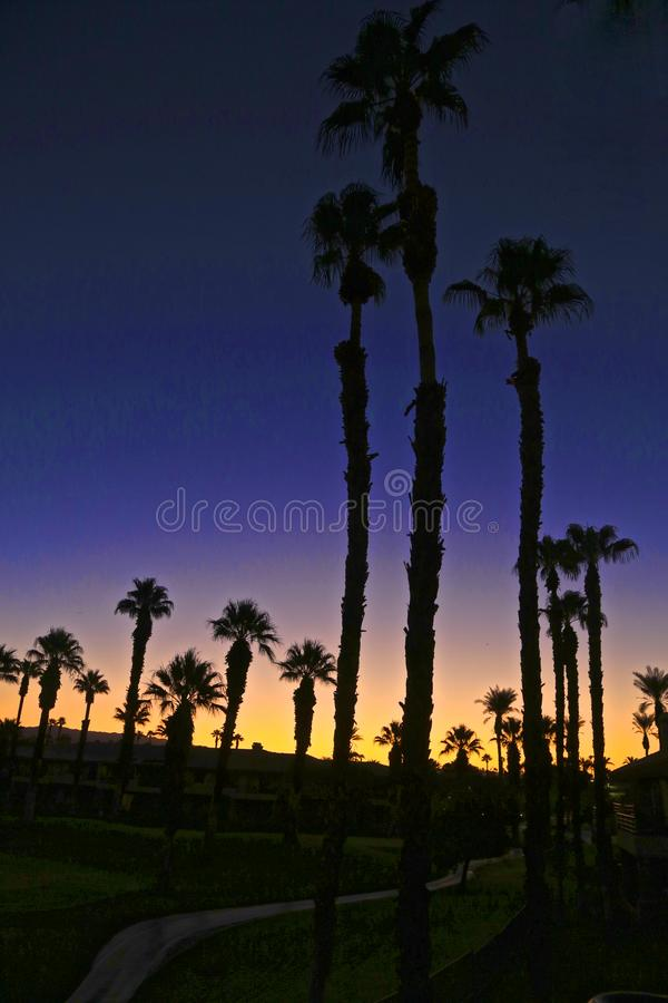 Sunrise desert palmtrees Palm Springs California royalty free stock images