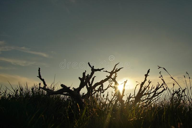 Sunrise with dry branch 2. Amazing sunrise with silhouette of dry branch in the Muntii Ciucului in Transylvania, Romania stock images