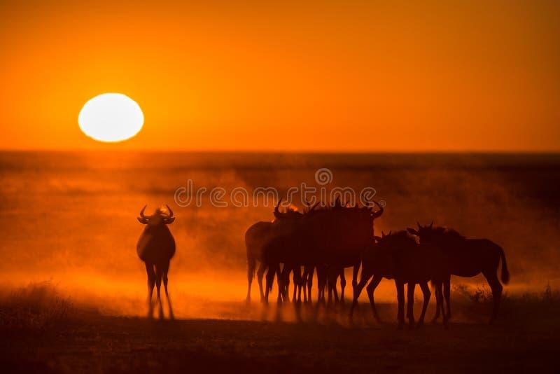 Sunrise in Etosha stock photography