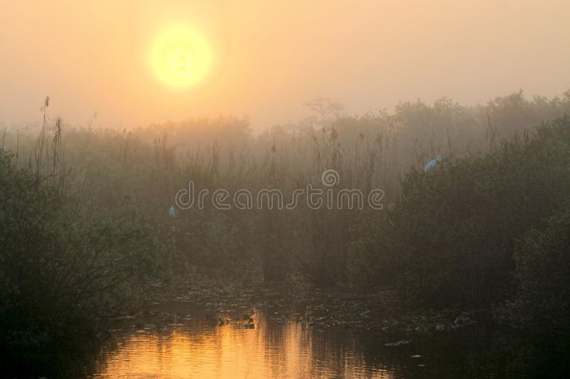 Download Sunrise in the Everglades stock photo. Image of nature - 29469808