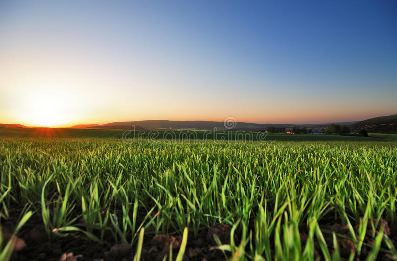 Sunrise. On a field, the day start royalty free stock photos