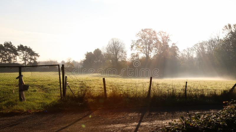 Sunrise in a field stock photography