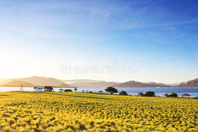 Sunrise flare with small green shrub in the foreground and misty mountains in the background. stock images