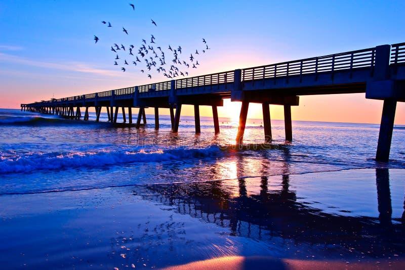 Download Sunrise Florida stock image. Image of ocean, birds, seawater - 23157793