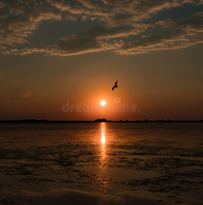 Beautiful summer sunrise with birds flying in the morning sky stock images