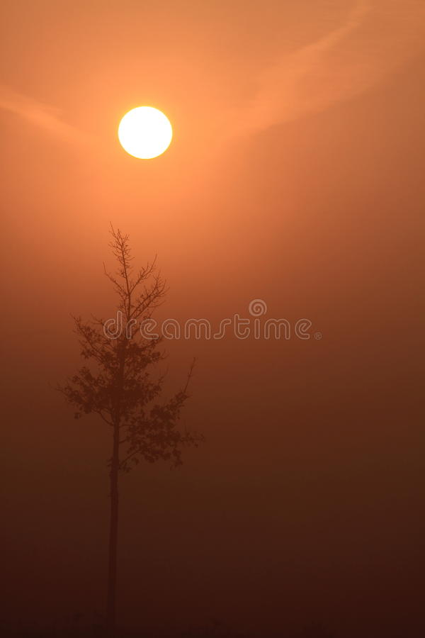 Download Sunrise with fog stock image. Image of nature, natural - 13866841