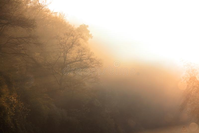 Foggy Forest in Sunrise stock photography