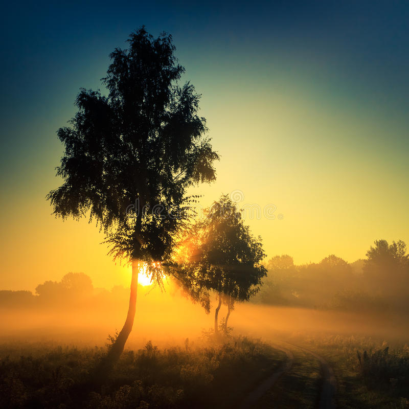 Sunrise in fog and a tree royalty free stock photos