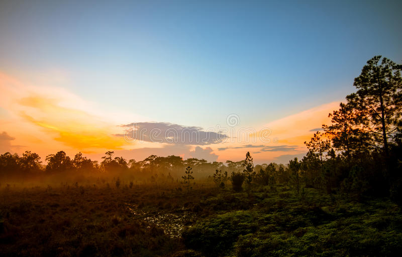 Sunrise forest and mist royalty free stock image