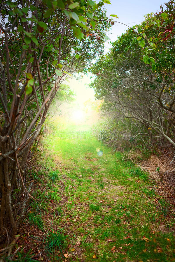 Download Sunrise forest path stock photo. Image of bringt, alley - 16644242