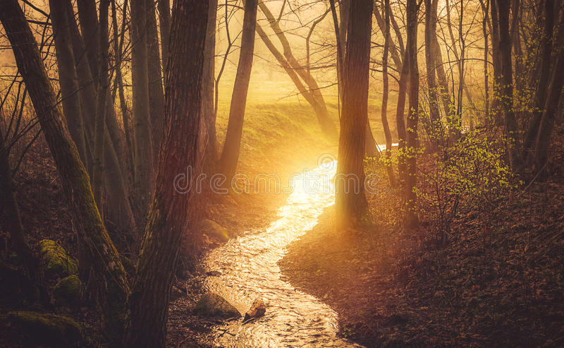 Sunrise in forest spring royalty free stock image
