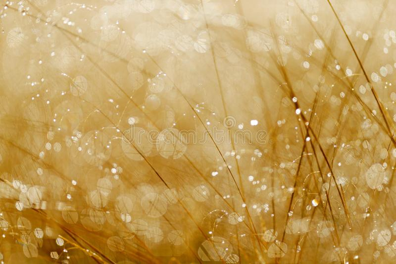 Sunrise in the grass with white frost water. Art view on nature. Misty meadow during morning with sun. Lens glare natural bokeh, s stock photo