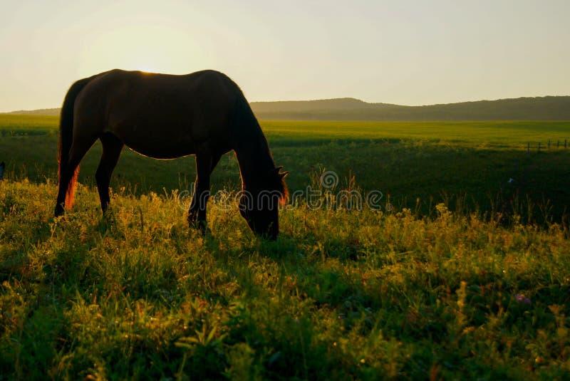 The sunrise on horseback stock photo
