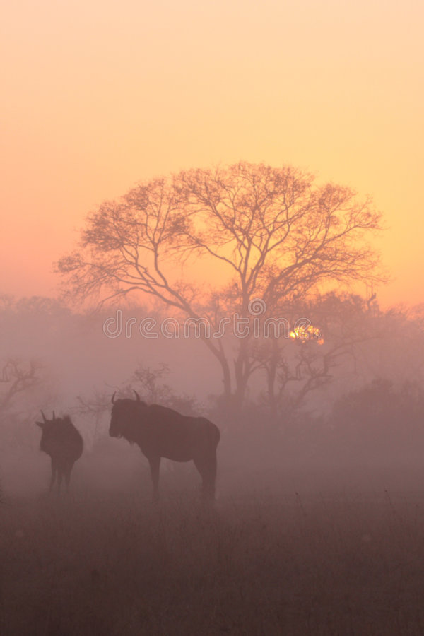 Free Sunrise In Sabi Sands Stock Images - 5827814