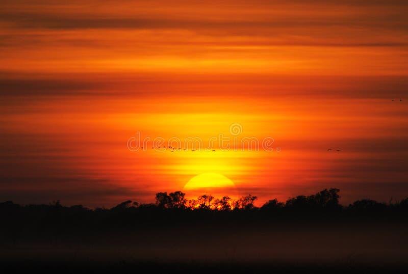 Sunrise at Kakadu wetland. Sunrise with birds in the wetlands of World Heritage listed Kakadu National Park royalty free stock image