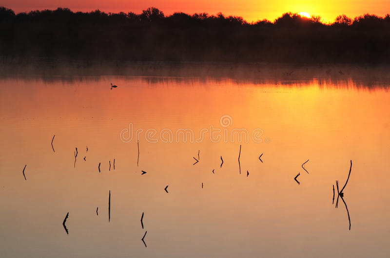 Download Sunrise and lake stock image. Image of gold, color, horizon - 21978869