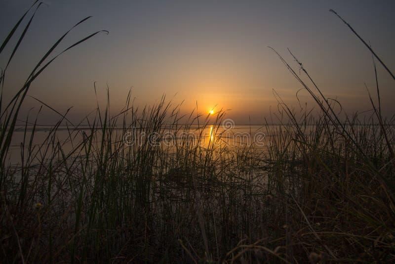 Sunrise lake and beautiful tall grass and reeds stock photo