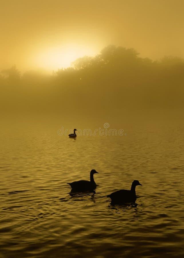 Download Sunrise Lake E stock photo. Image of partners, birds, daybreak - 3219948