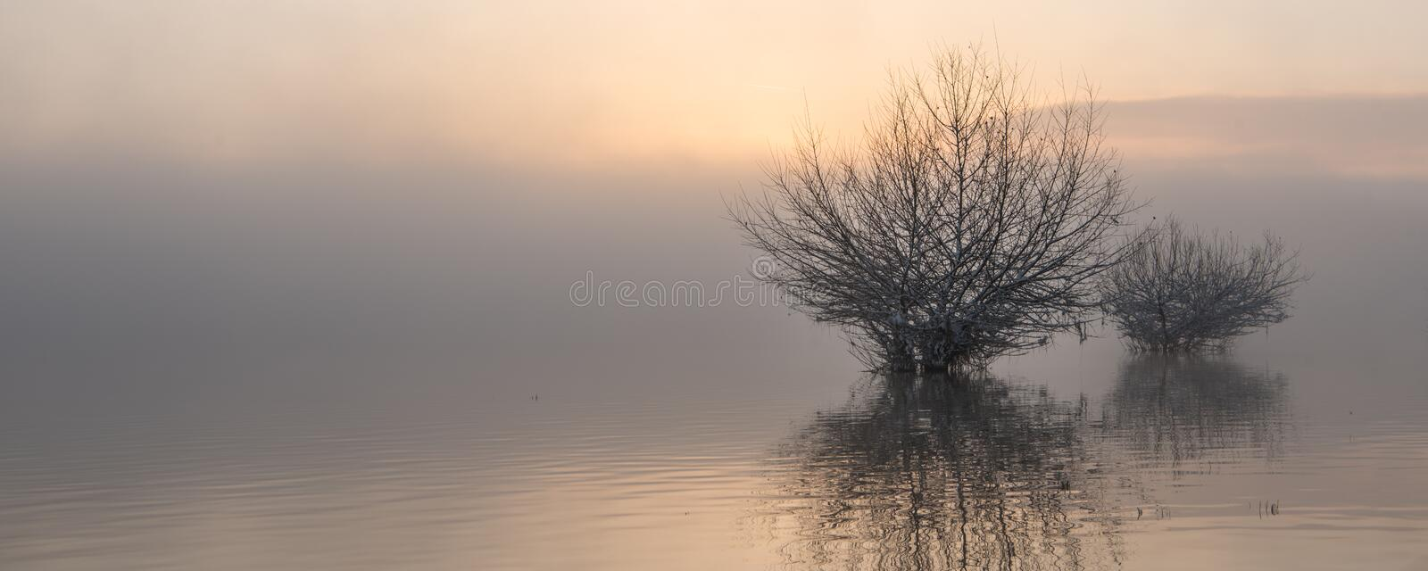 Sunrise at the lake in fog. Moody sunrise on the water in fog in autumn. trees reflect in the water stock image