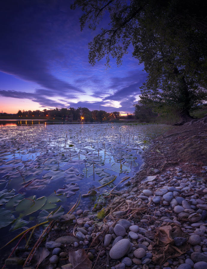 Sunrise on the Lake full of Water Lily`s stock images