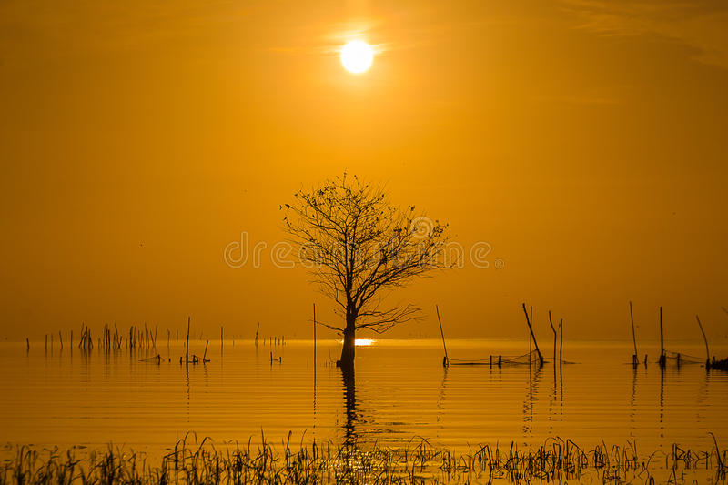 Sunrise in lake and leafless tree royalty free stock image