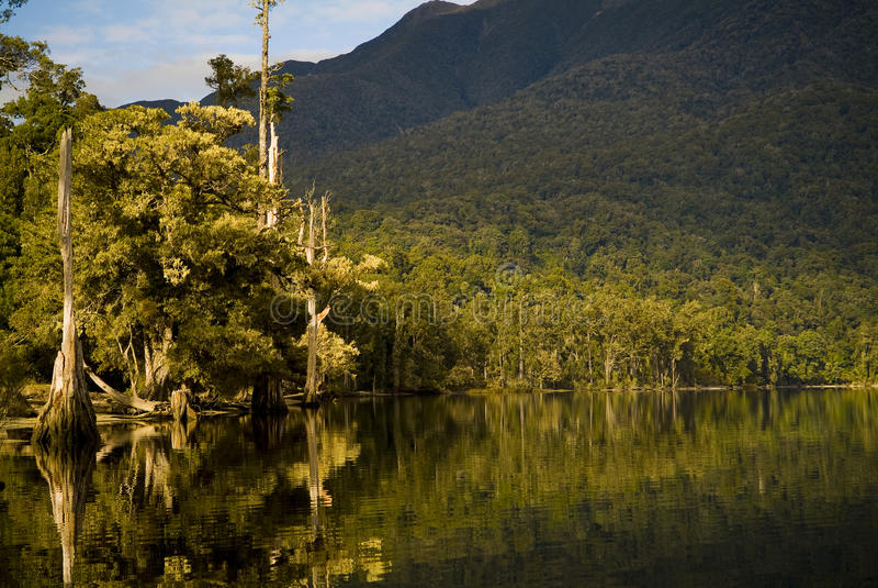 Sunrise Lake Reflections. Forest reflections on lake edge with morning light royalty free stock photo