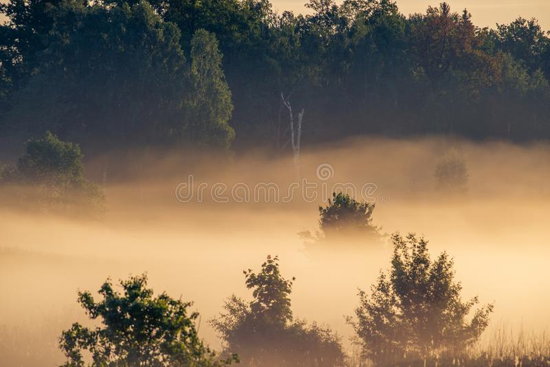 Sunrise landscape of forest and mist in orange light stock photography