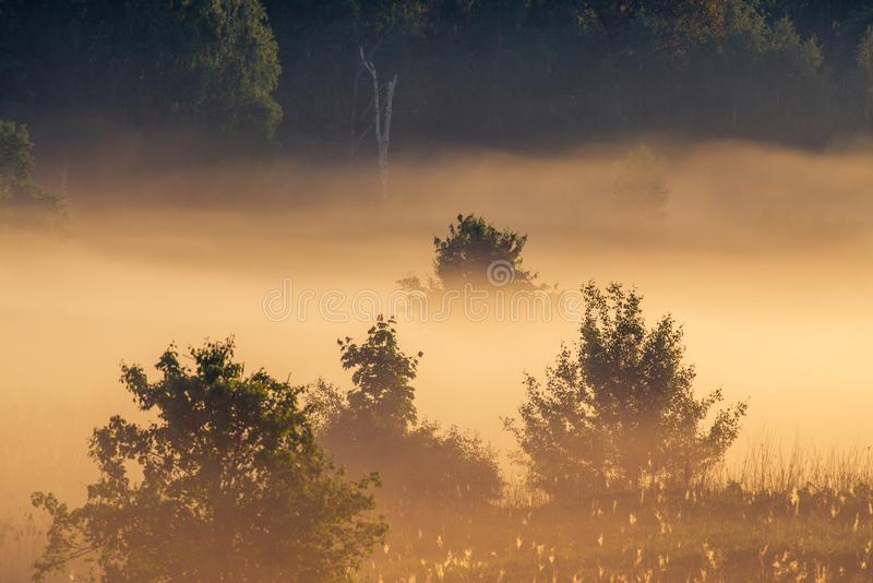 Sunrise landscape of trees in misty morning stock image