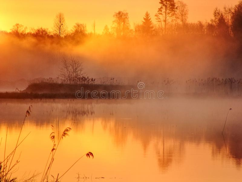 Sunrise landscape at the water, trees reflection in the lake on foggy morning, early morning reeds mist fog and water surface on t. He lake royalty free stock images