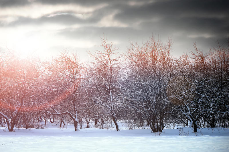 Sunrise landscape winter park trees. Urban landscape on a sunny winter day, walkways and streets royalty free stock photography