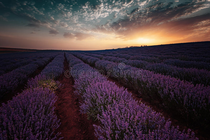 Sunrise at lavender field, near Burgas city, Bulgaria stock photography