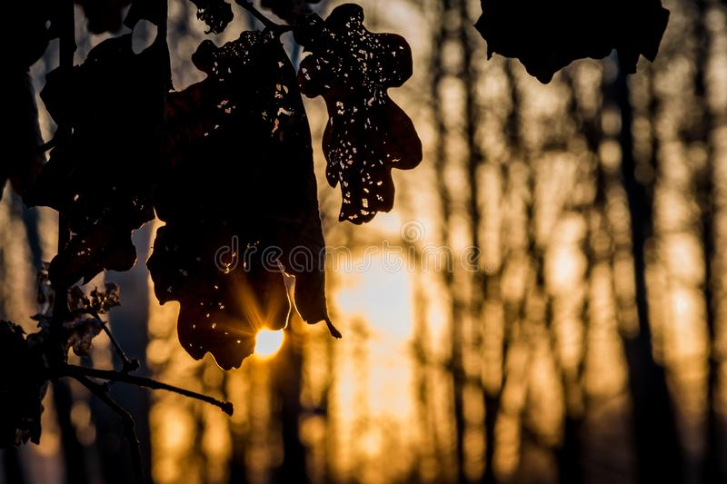 Sunrise light rays coming through an old perforated oak leave du royalty free stock photography