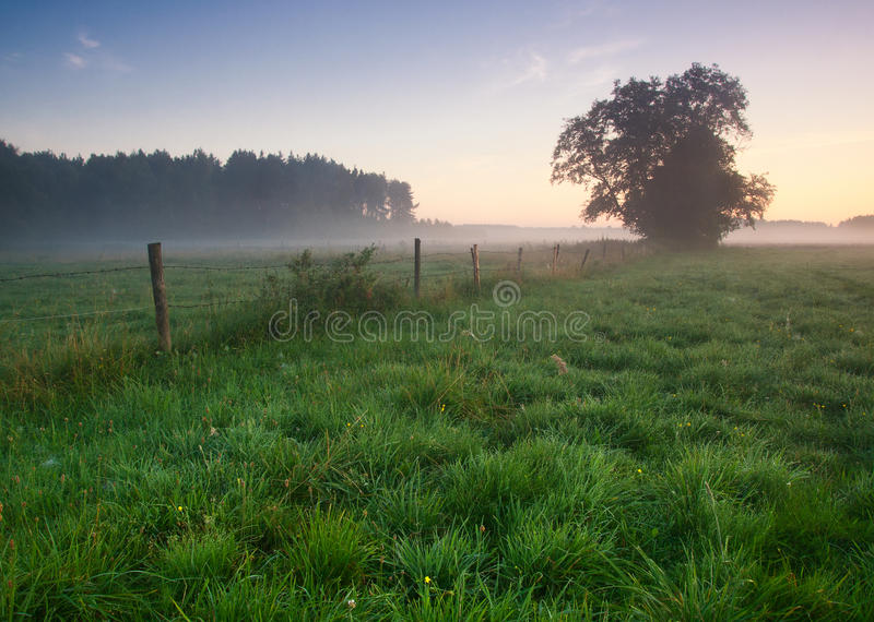 Sunrise at meadow royalty free stock photos