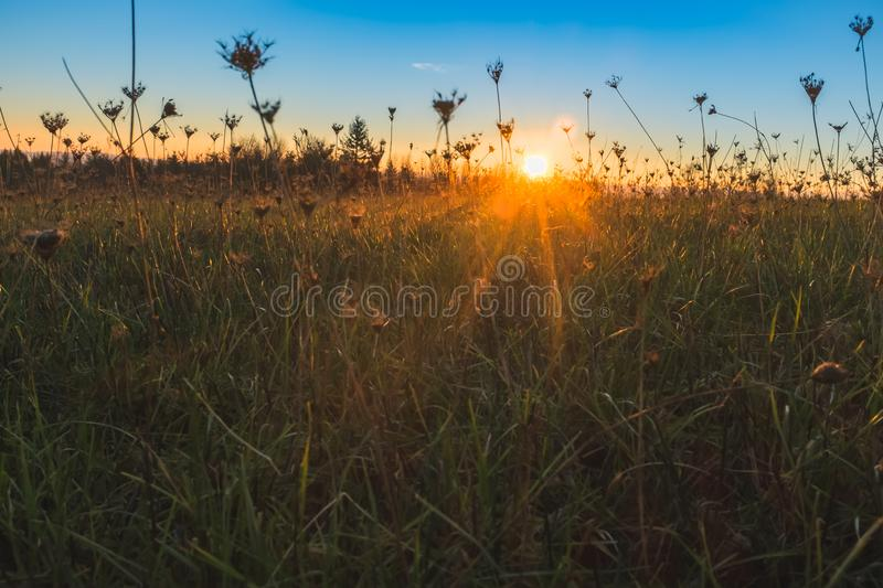 Sunrise in a meadow from ground level stock photos