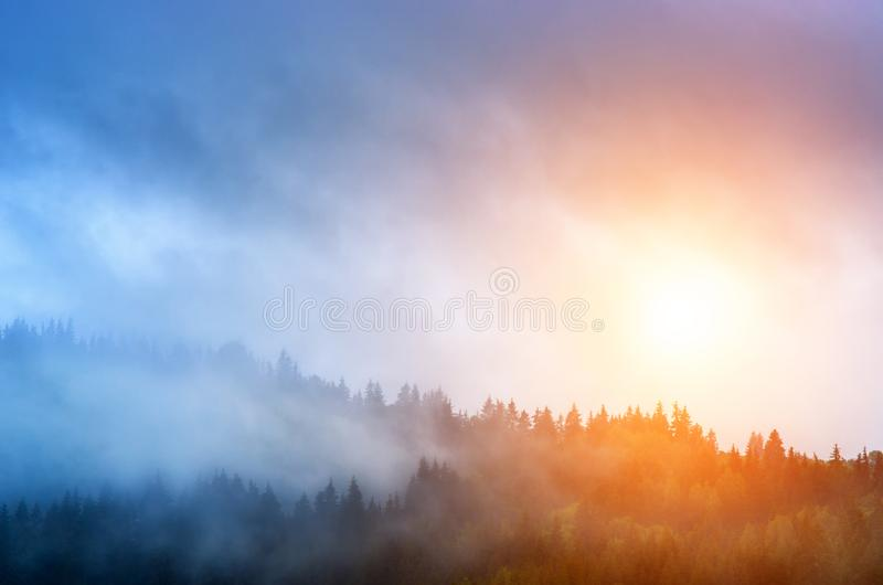 Sunrise and mist over the pine forest in the mountains stock image